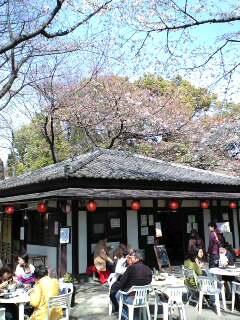 お昼は桜の下で…